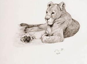 Maurice prost dessins - Lionne dessin ...